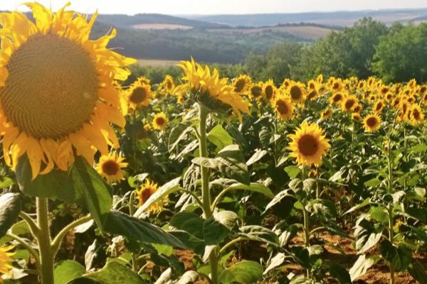 Hongarije: wild van wandelen en schilderen