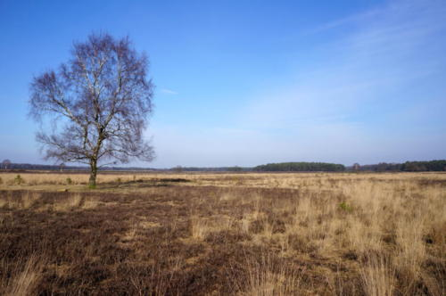 Nature reserve area called Het Gooi near Hilversum in the Netherlands.