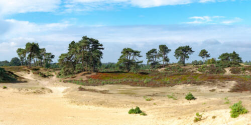 Panorama of the Aekingerzand national park in Appelscha, The Netherlands