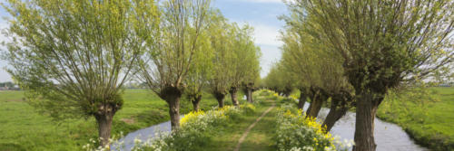 Panorama view on a typical Dutch landscape in spring in the beautiful green heart of the Netherlands. The path is part of the Pelgrimspad, an old traditional pilgrimage trail through the Netherlands