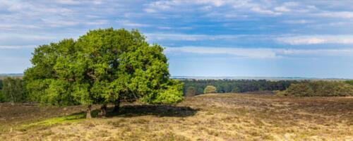 Panoramic view Veluwe, Netherlands