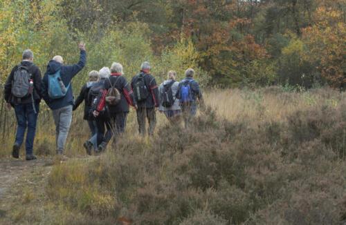 Fall. Autumn. Having a stroll in nature. Forest Netherlands. Reestdal near De Wijk Drenthe. Going for a walk.