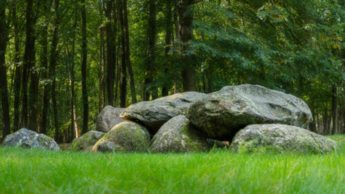 Megalith D7 in the forest of Drenthe