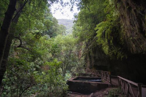 Los Tilos Forest (La Palma, Canary Islands, Spain)
