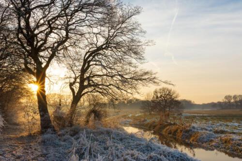 Winter stream valley landscape with oak tree - Drentsche Aa, Drenthe, Netherlands.
