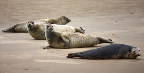Seals resting on a sandbank