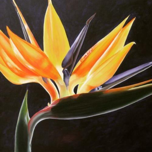 Schilderles-van-Beatrix-bloem1-60plusEndus