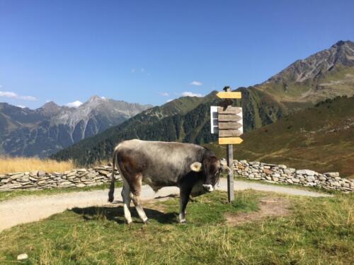 wandelen-ahornpanoramarundweg-ahornbahn